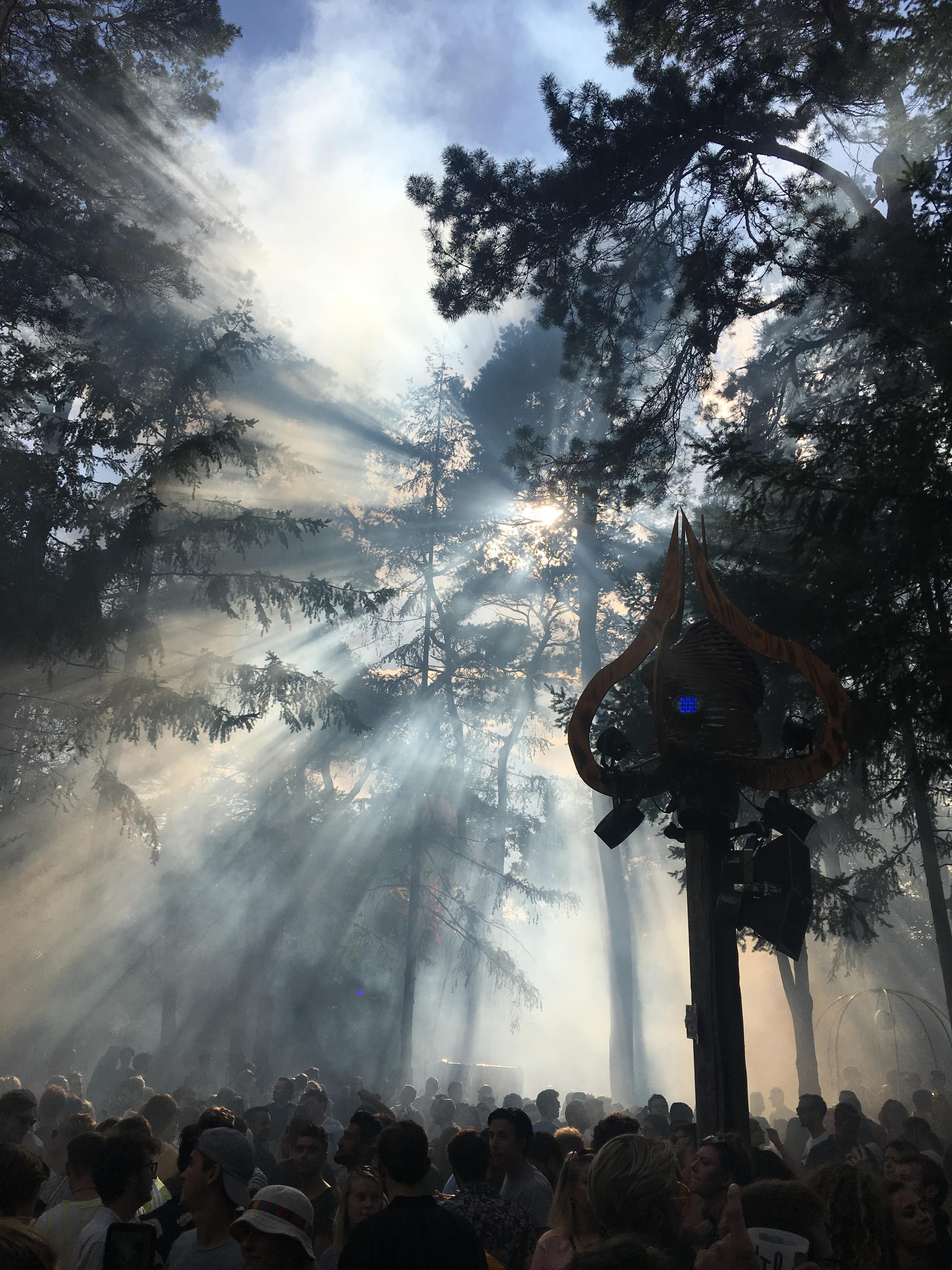 Into The Woods 2019 - bos met zon door de bomen